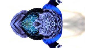 LC_Birdwatching-6w